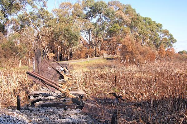 Riding path in bushfire area
