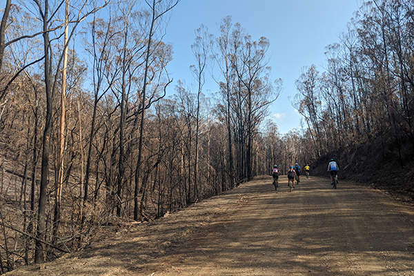 Bike riders riding through burnt forest