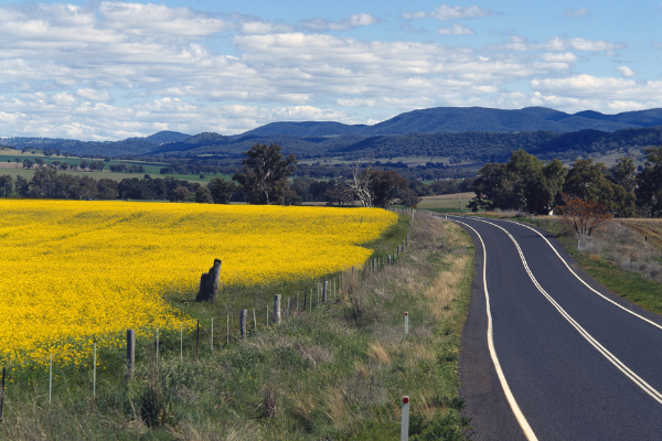 Bathurst Canola Fields