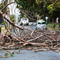 Fallen branches obstructing road